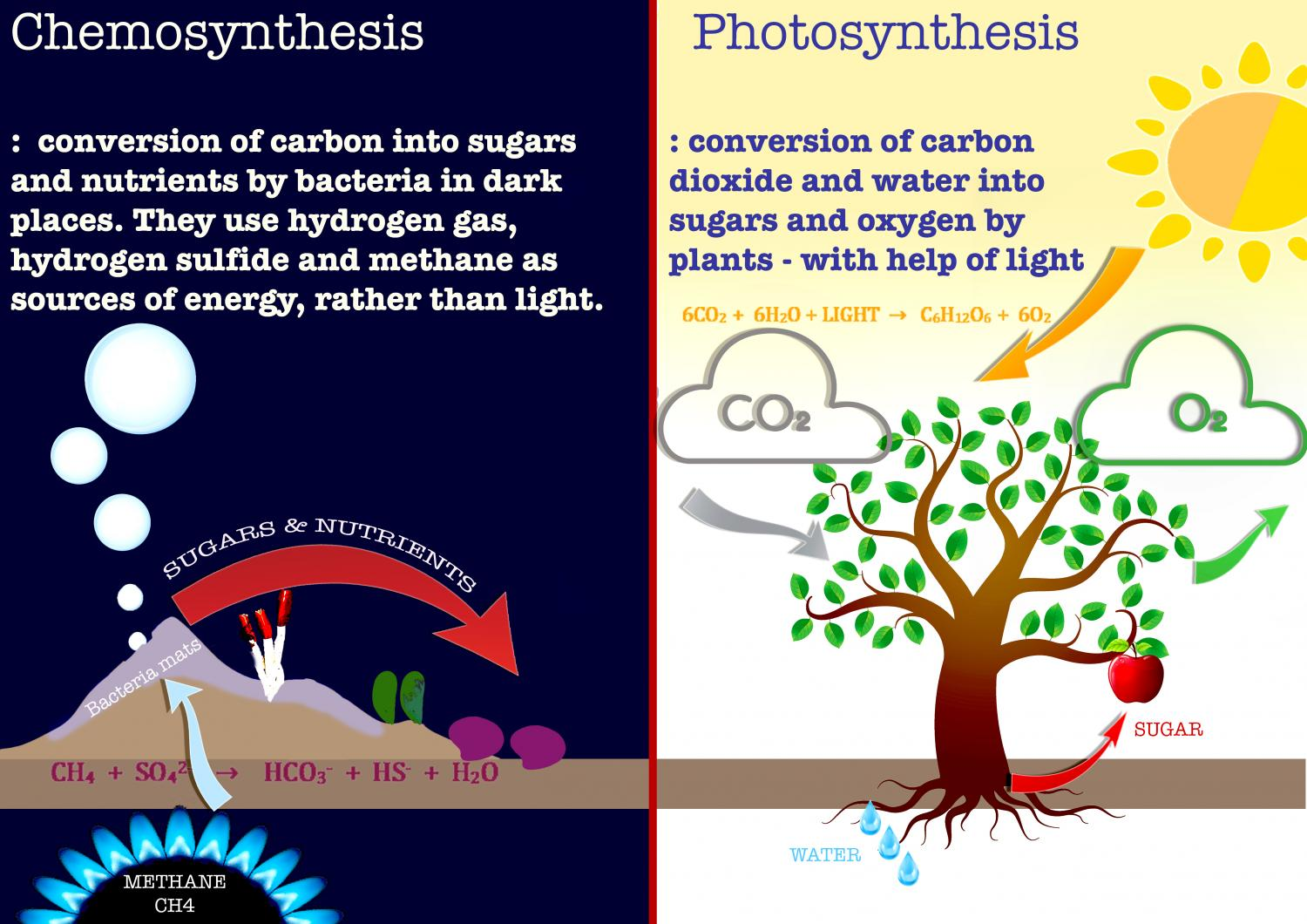 4 steps chemosynthesis There are also autotrophic organisms that do not perform photosynthesis but which do perform chemosynthesis plants, algae and cyanobacteria are photosynthetic organisms in plants and algae, light is absorbed by chlorophyll, a molecule present in cytoplasmic organelles called chloroplasts.