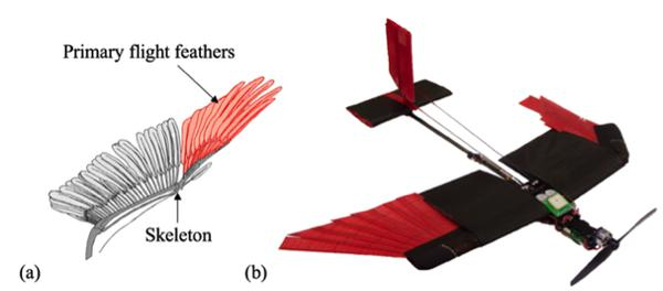 a drone that flies almost like a bird rh phys org