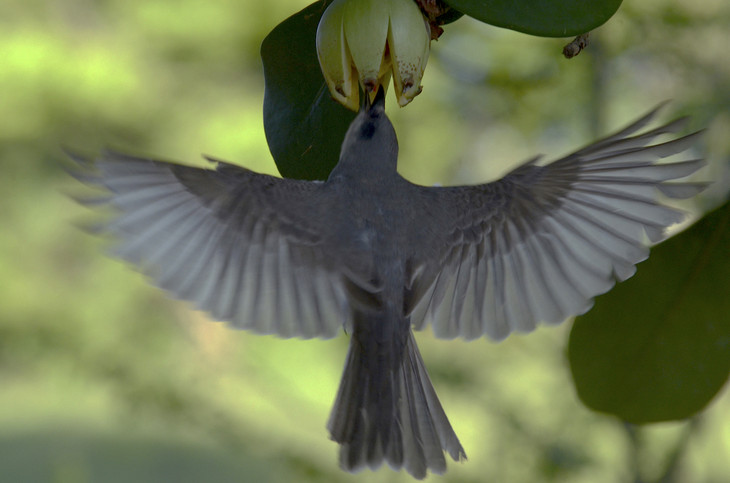 Why is the study of birds important #2