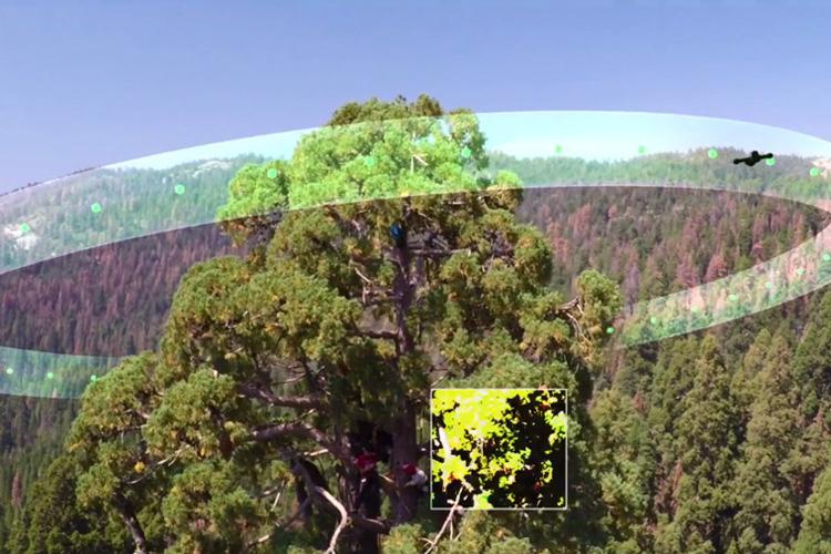 Drones Help Monitor Health Of Giant Sequoias