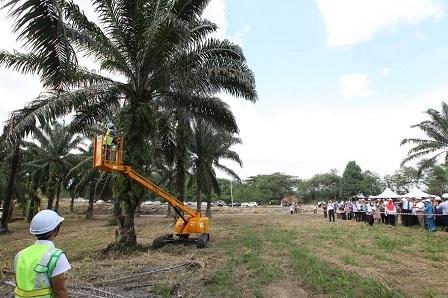 Electric E Cutter Can Reach Oil Palm Trees As High As 30 Feet