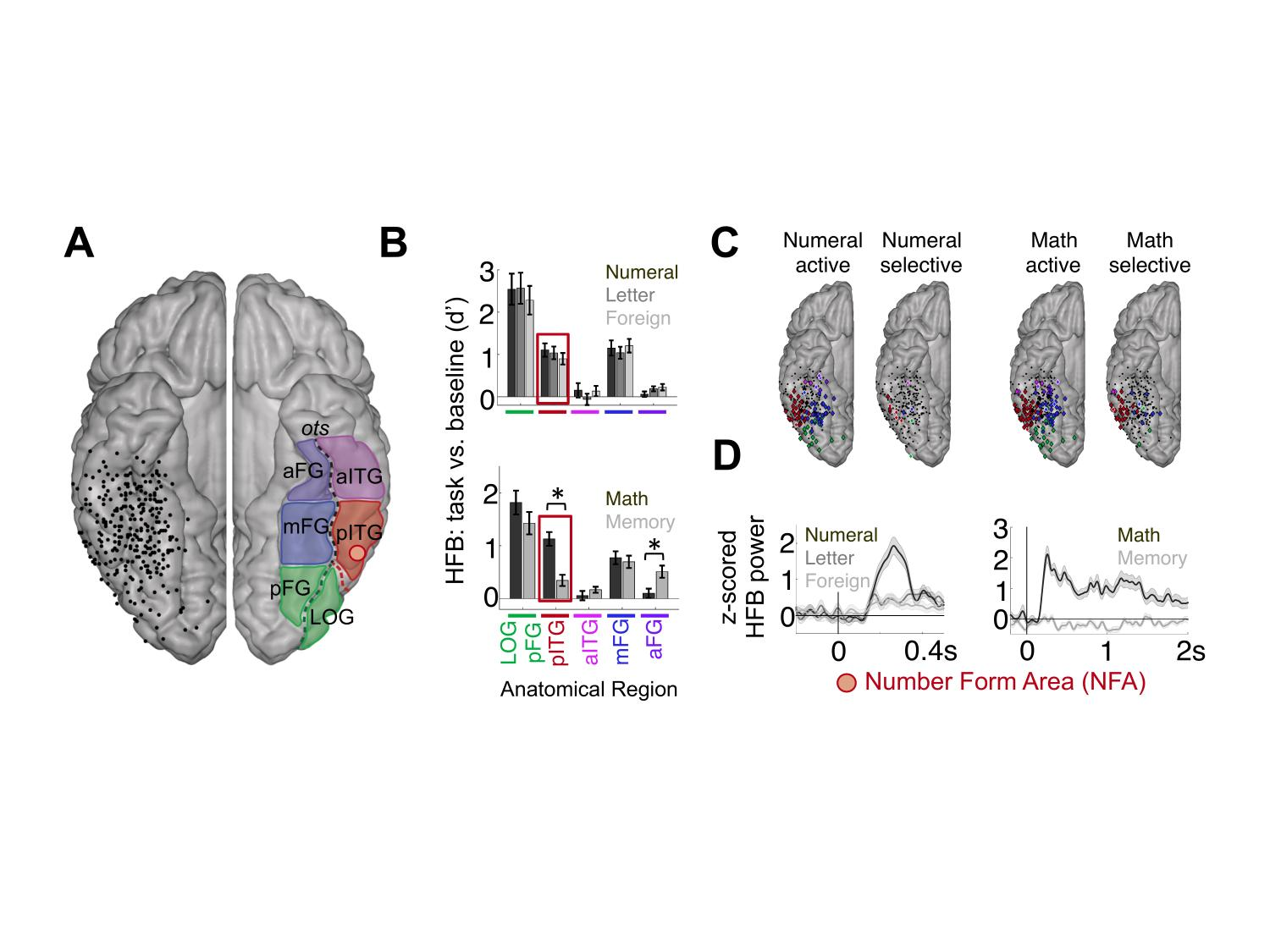 Your Brain On Math Functional Coupling Between Neural Regions