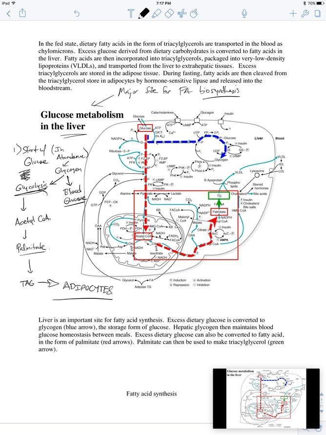 death by modern medicine pdf