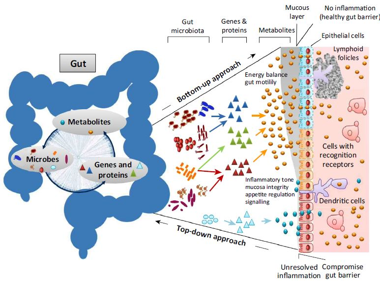 Our Gut Microbiome Is Always Changing It S Also