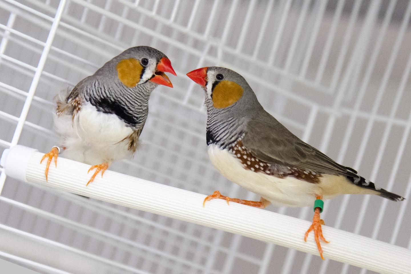 Stress bites! Researchers study mosquito/bird interactions