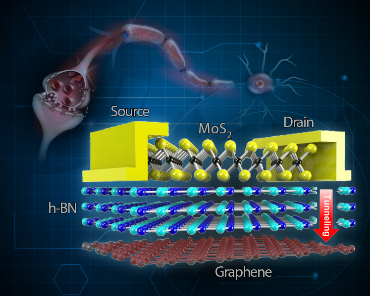 Stretchable, flexible, reliable memory device inspired by ...