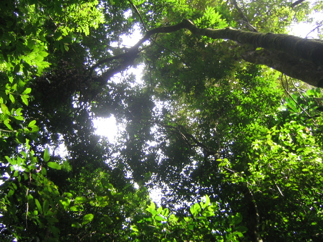 The consistency found in size structure across tropical rainforests appears to be driven by competition for light among small inidual trees following a ... & Research reveals deep ties between erse tropical rainforests