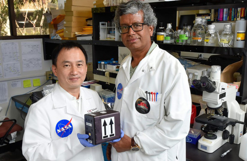 Scientists to send fungi into orbit in quest to develop ...