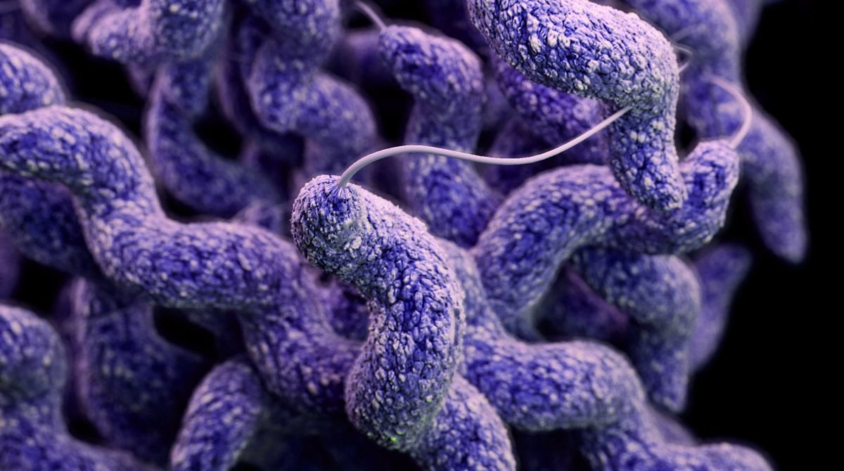 What Organism Causes Food Poisoning