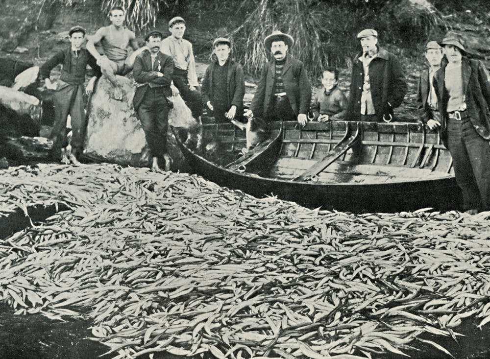 Plenty of fish in the sea not necessarily as history shows for History of fishing