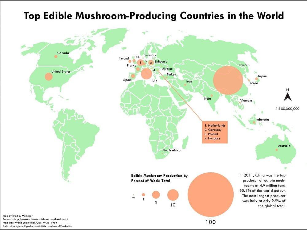 Magic Mushrooms Europe