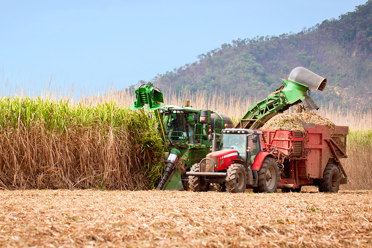 global expansion in brazil corn farming