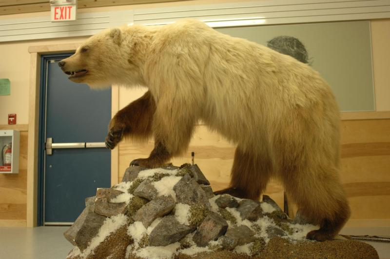 an analysis of the canadian black bear species Polar bear ursus maritimus) i analysis of new and updated information on the polar bear's biology and polar bears are the largest living bear species.