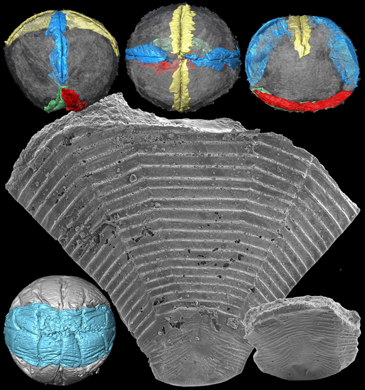 Fossilorphan