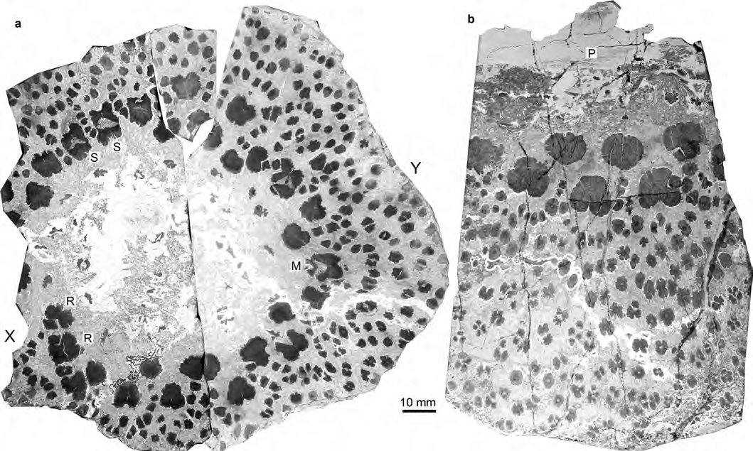 Fossils from the world\'s oldest trees reveal complex anatomy never ...