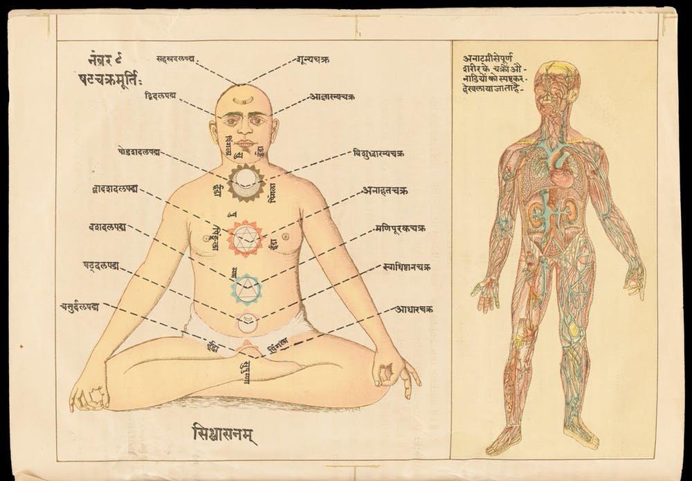From Ayurveda To Biomedicine Understanding The Human Body