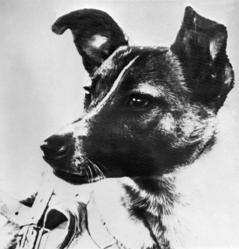 Laika The First Dog In Space Pictures