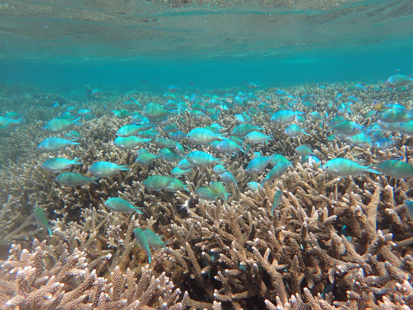 c74724045 Marine ecosystems show resilience to climate disturbance