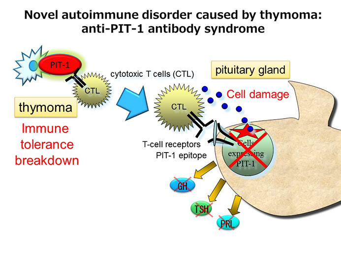 Essay/Term paper: The immune system