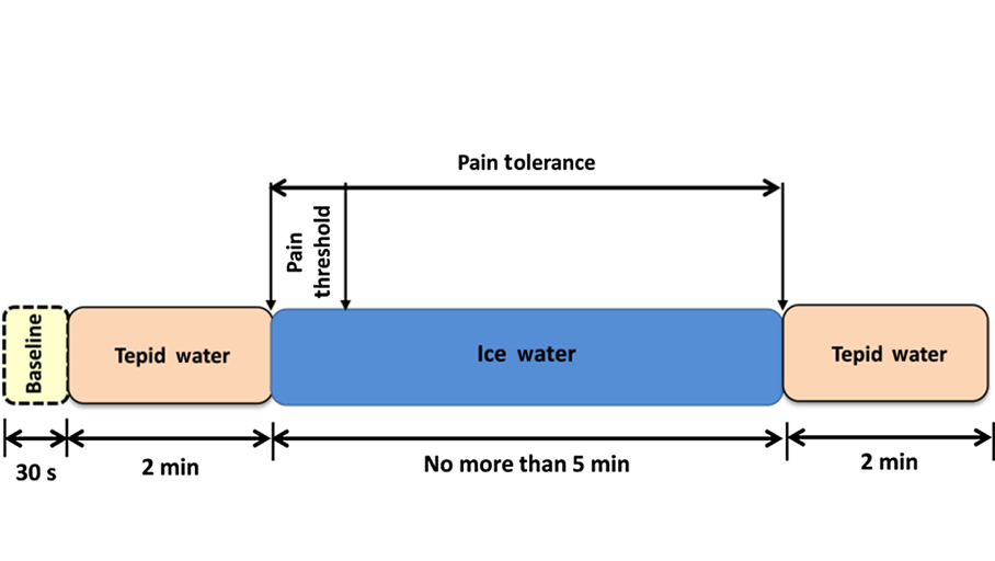 Tool monitors brains circulatory response to pain a block diagram illustrates the cold pressor protocol applied in a drexel university study on functional near infrared spectroscopy in assessing pain ccuart Choice Image
