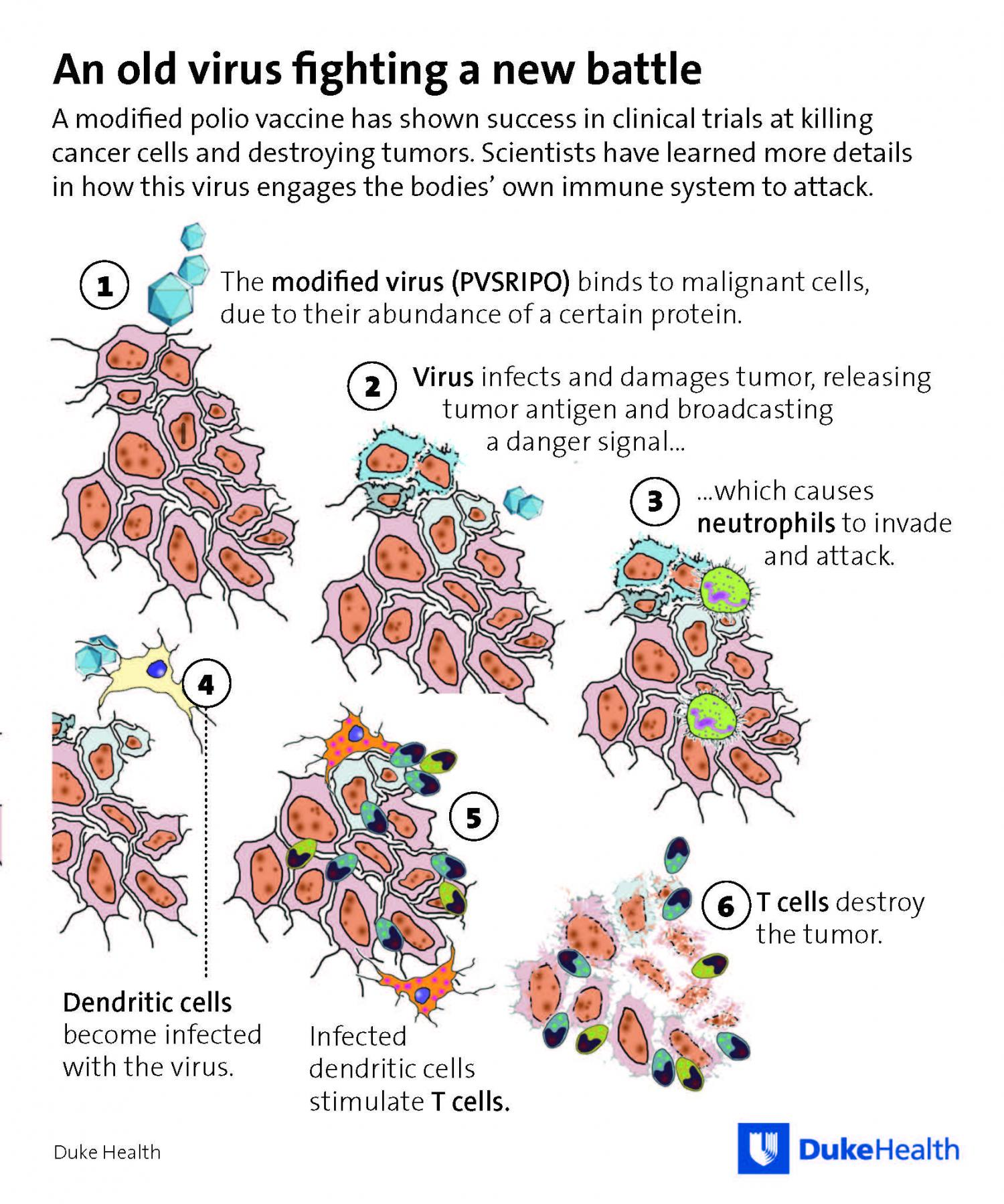 Poliovirus Therapy Induces Immune Responses Against Cancer