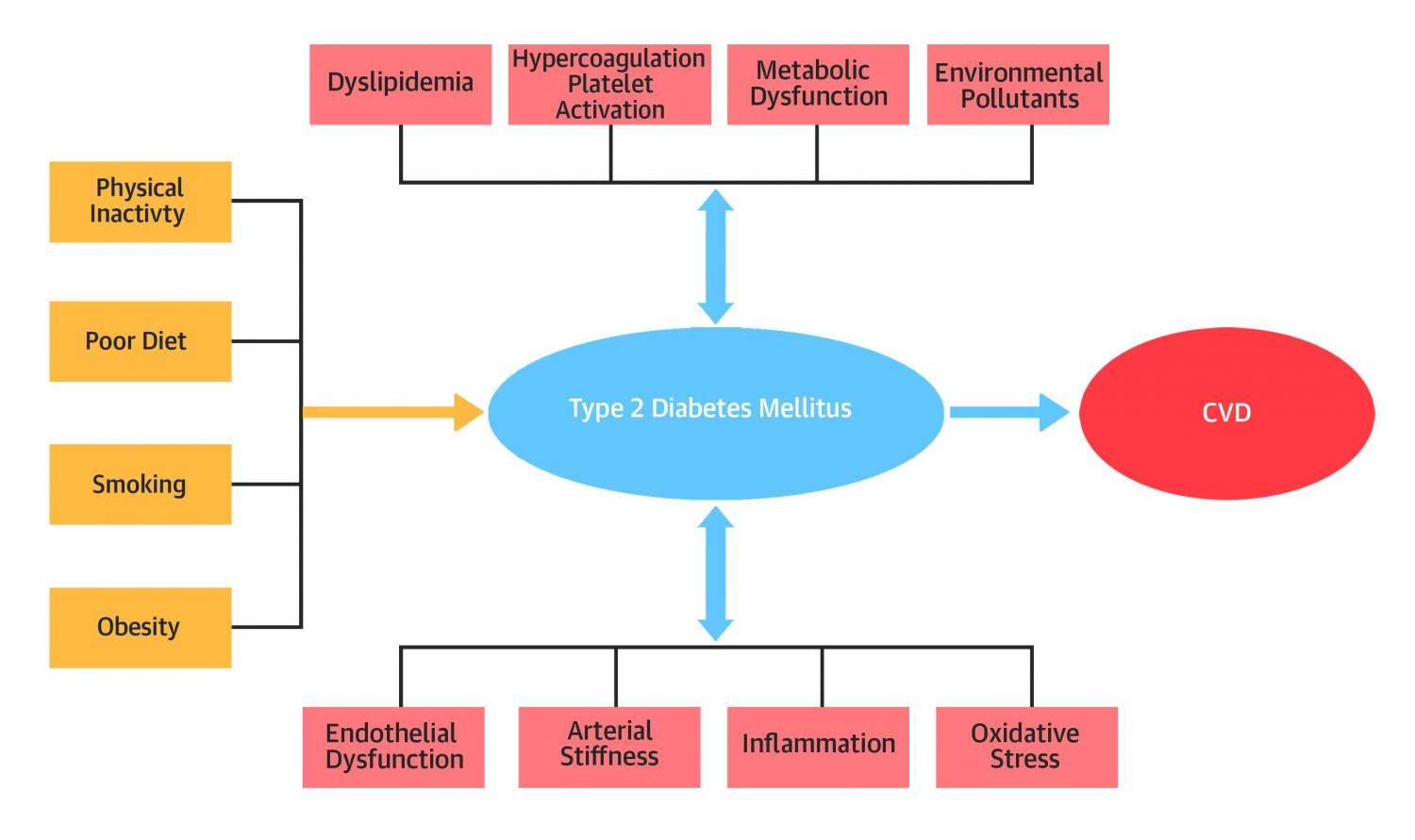 Prevention could reduce heart disease among type 2 diabetes patients primary prevention could reduce heart disease among type 2 diabetes patients ccuart Choice Image