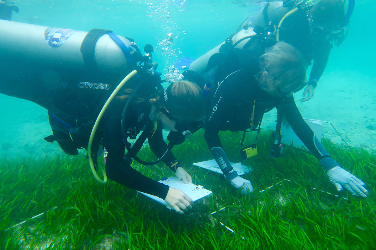 For Seagrass Biodiversity Is Both A Goal And A Means For