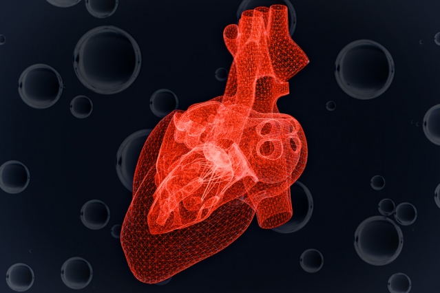 Study Predicts Heart Cells Response To Dwindling Oxygen