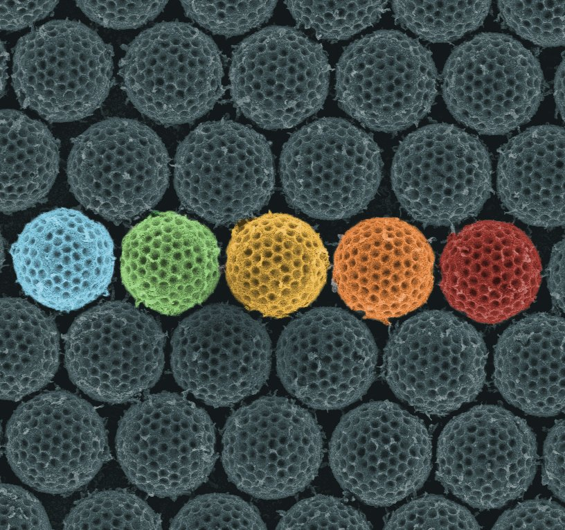Synthetic material acts like an insect cloaking device