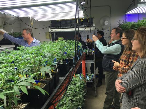 Weed 101: Colorado agriculture office shares pot know-how