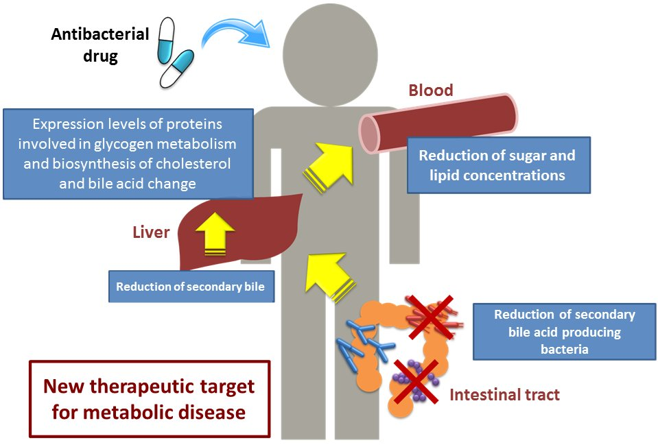 How Intestinal Bacteria Can Affect Your Blood Sugar And Lipid Levels