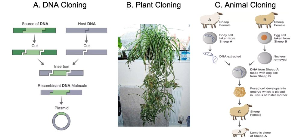 difference between cloning plants and animals