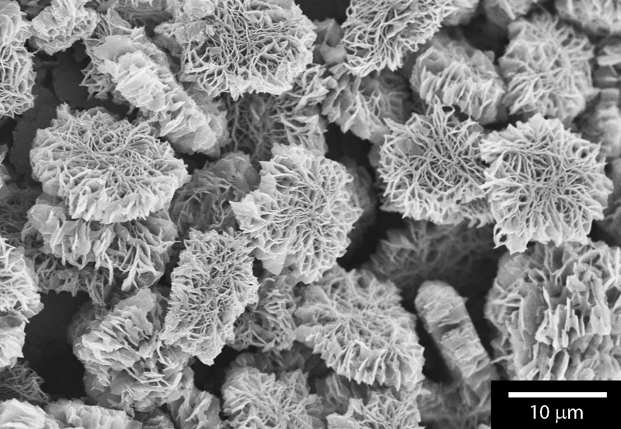 Researchers observe organic chemical reaction with electron microscope