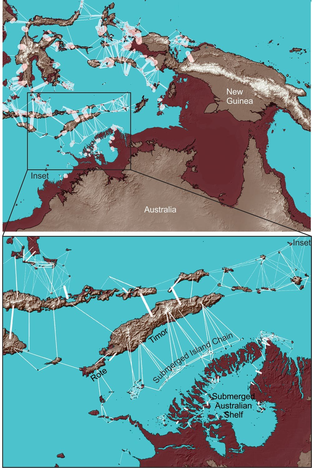 islandhopping study shows the most likely route the first