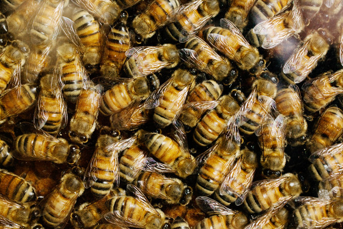 agricultural fungicide attracts honey bees study finds