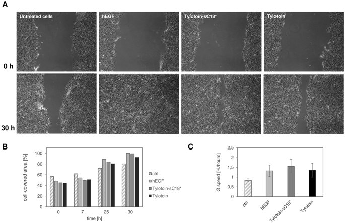 Designing a Novel Cell-Permeable Peptide Chimera to Promote Wound Healing