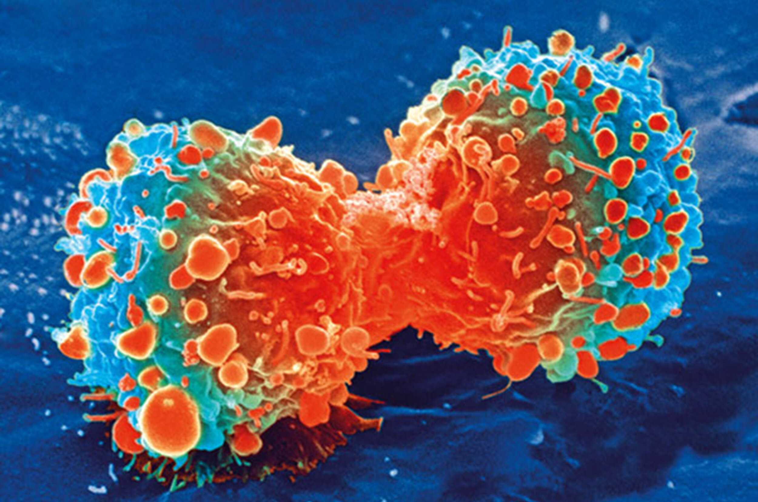 Why haven't cancer cells undergone genetic meltdowns?
