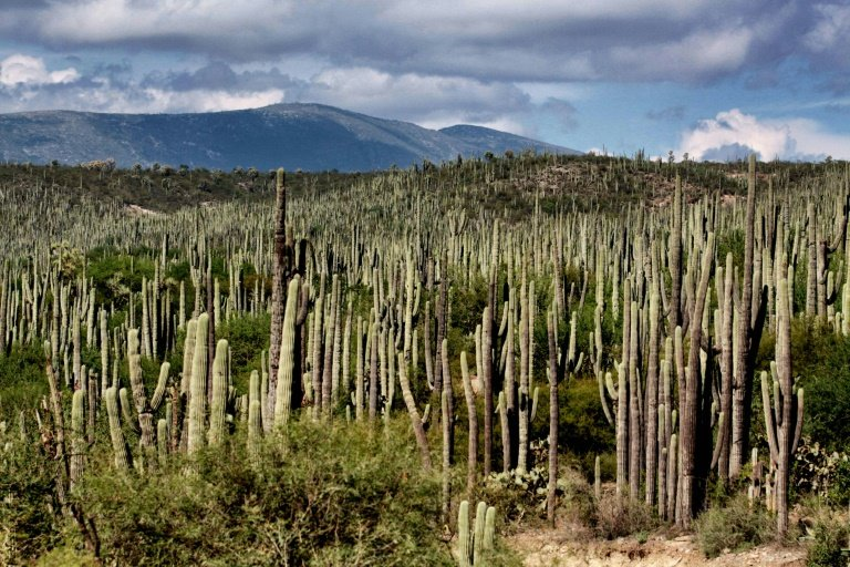 Valley of Tehuacan-Cuicatlan listed as UNESCO heritage site e8b2afe8b8e2d