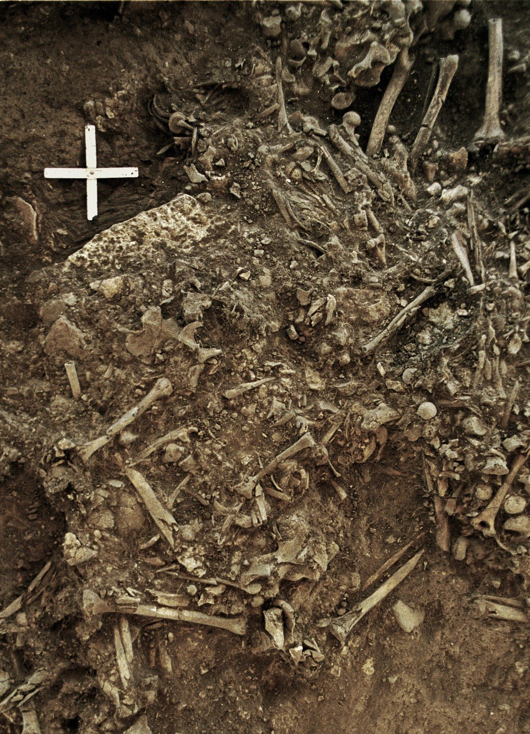 photo image An ancient strain of plague may have led to the decline of Neolithic Europeans