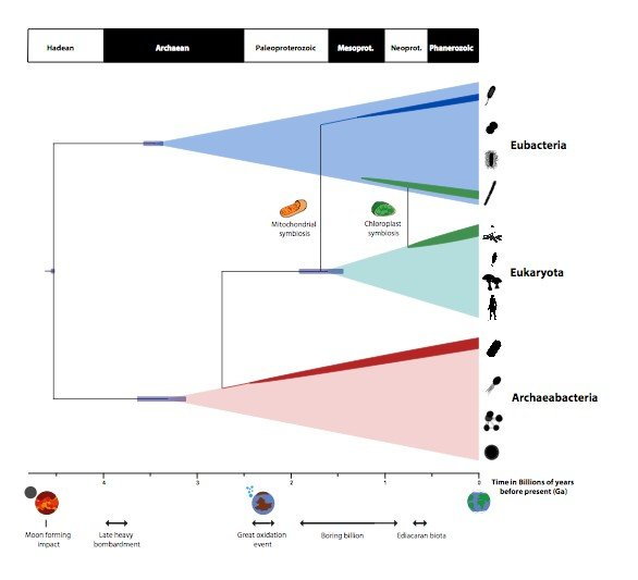 A timescale for the origin and evolution of all of life on Earth