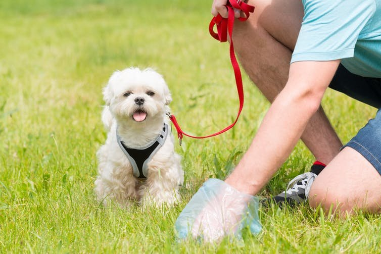 Why Do Dogs Eat Their Own Faeces