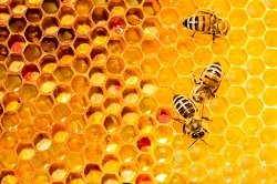 photo image Falling honeybee numbers inspire heat treatments and smart beehives