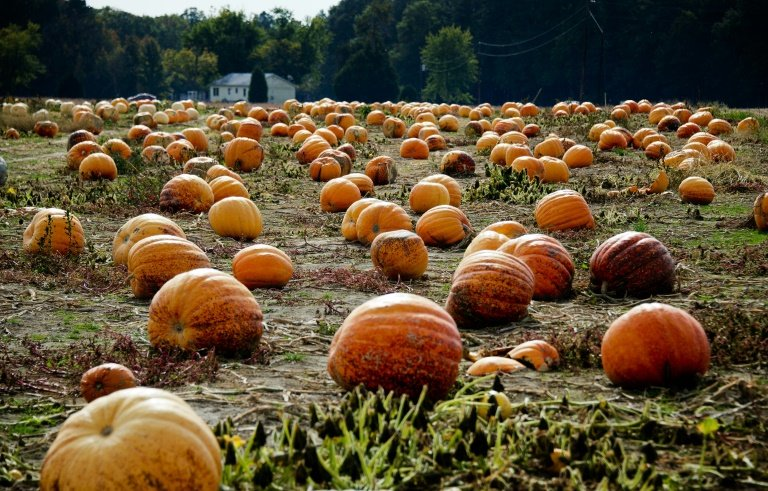don t eat bitter pumpkin study warns after women lose hair