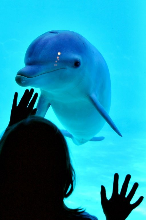 Dolphin | France Overturns Ban On Captive Dolphin Breeding