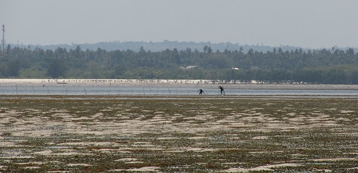 Giving seagrass its due