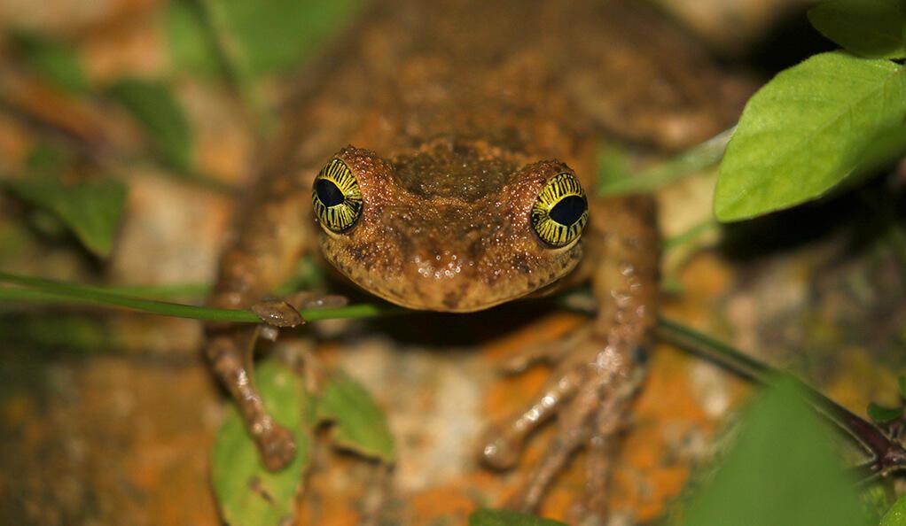 Amphibians Journal Human threats to the a...