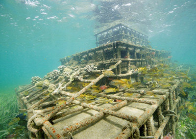 photo image Innovative restoration of coral reefs helps protect Caribbean islands