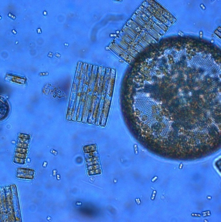 key biological mechanism is disrupted by ocean acidification