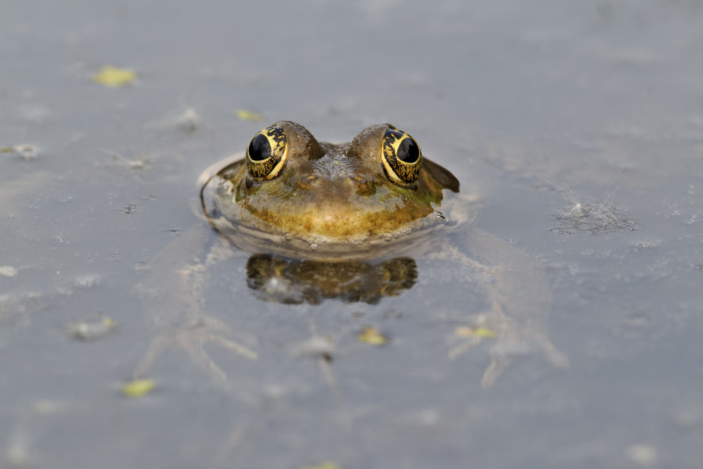 What S Wrong With My Garden Pond Water: Make Your Garden Frog Friendly