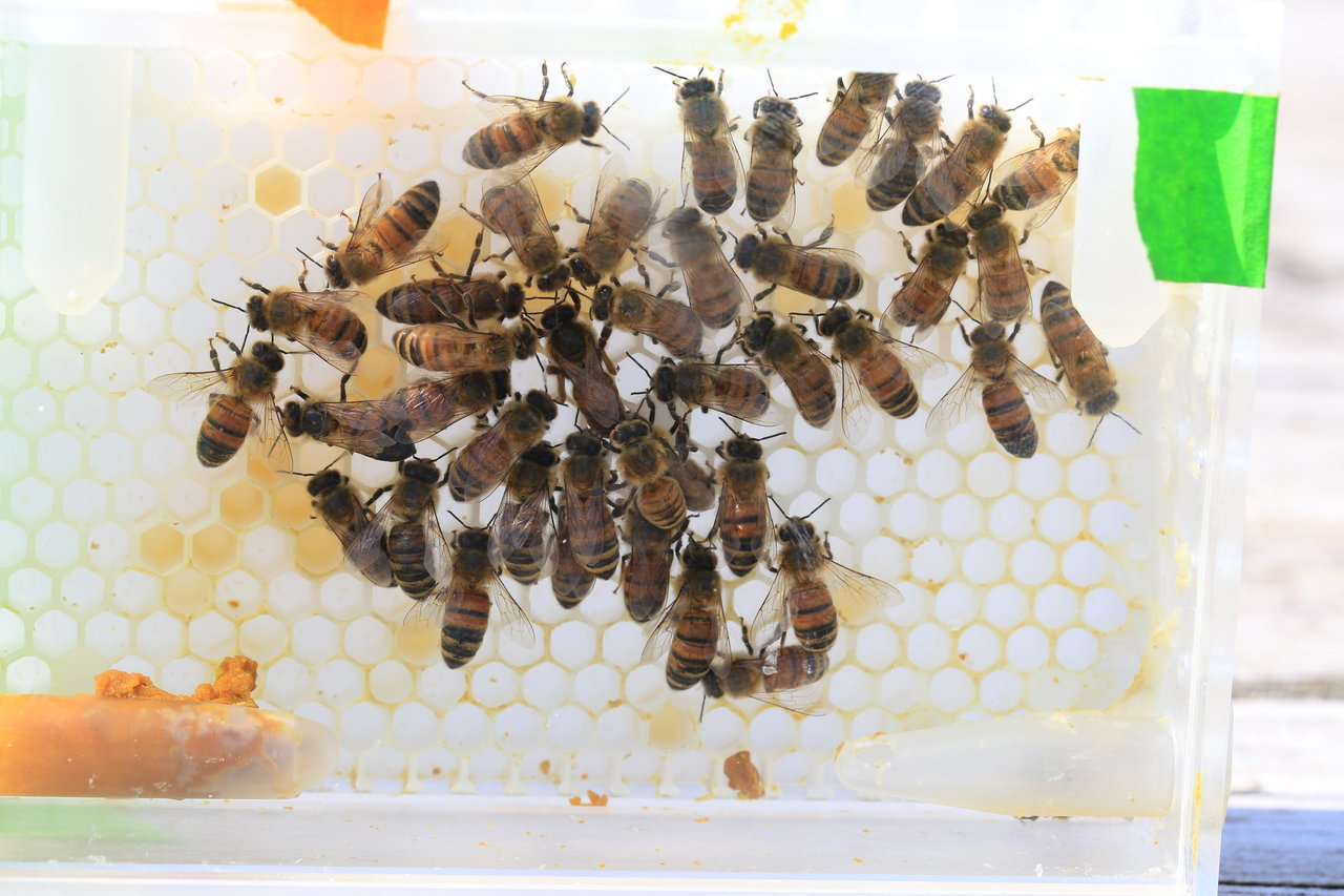 New laboratory system allows researchers to probe the secret lives of queen bees